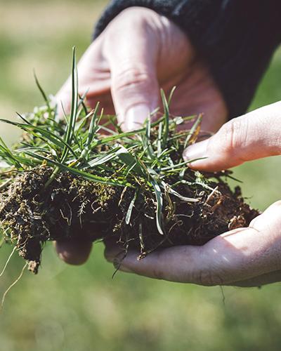 無農薬での栽培